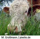 (c) M. Großmann/pixelio